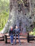 40ispred-divovske-sekvoje---Redwood